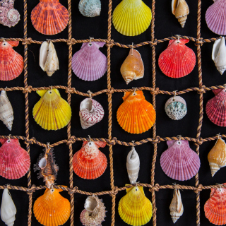 Seashells Wallpaper for 1024x1024