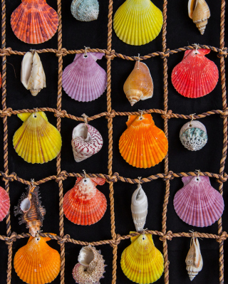 Seashells Background for Nokia C1-00