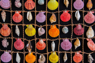 Seashells Background for HTC Desire 310