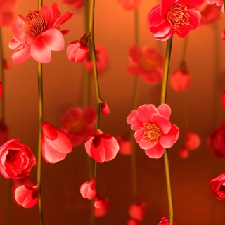 Bright Red Floral HD Background for 208x208