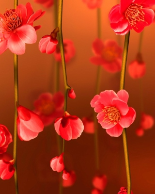 Bright Red Floral HD Wallpaper for Nokia C5-06