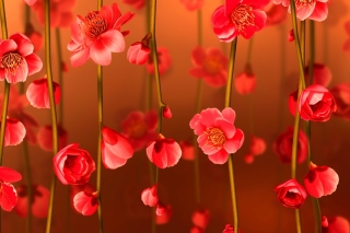 Bright Red Floral HD Wallpaper for Nokia XL