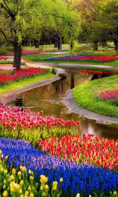 Sfondi Tulips and Muscari Spring Park 240x400