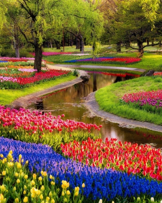 Free Tulips and Muscari Spring Park Picture for iPhone 5S