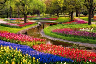 Tulips and Muscari Spring Park Background for Android, iPhone and iPad