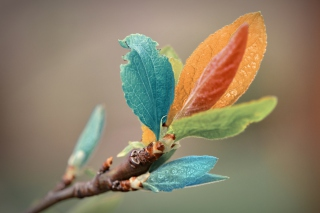 Spring Leaves Macro Wallpaper for Android, iPhone and iPad