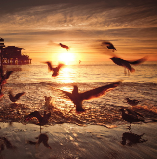 Seagulls In California Beach Wallpaper for 1024x1024