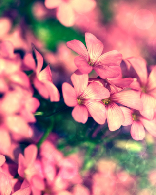 Bush of pink flowers - Fondos de pantalla gratis para iPhone 4S