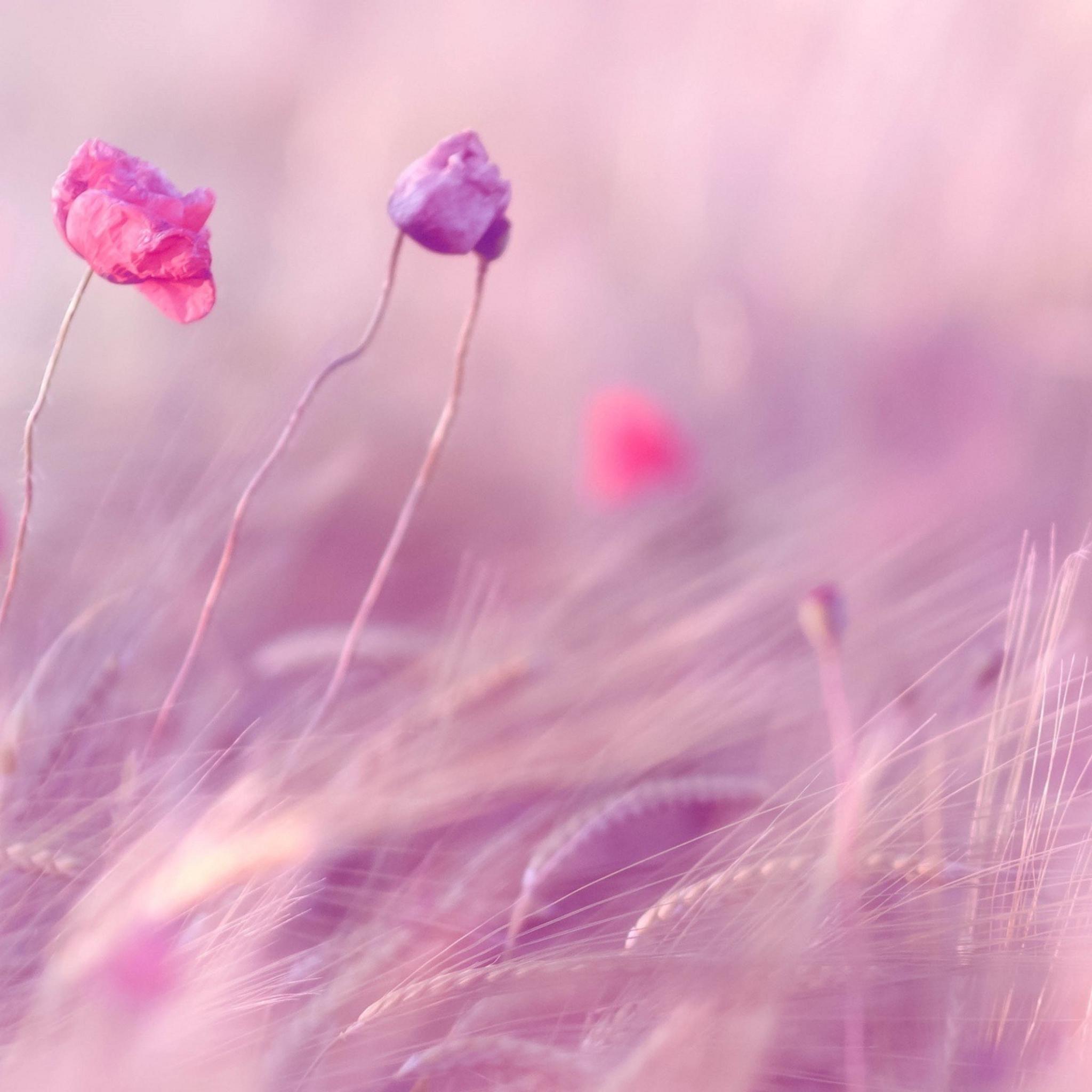 цветок частицы лепестки загрузить
