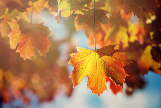 Free Autumn Time Picture for Android, iPhone and iPad