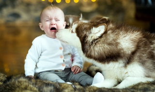 Kostenloses Baby and Dog Wallpaper für Android, iPhone und iPad