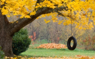 Free Tire Swing Picture for Android, iPhone and iPad