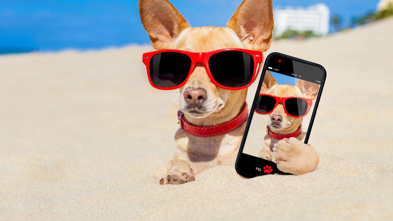 Днем ветеринара, мобильный прикольные картинки