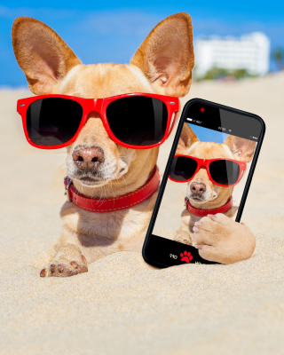 Chihuahua with mobile phone Wallpaper for Nokia Asha 310