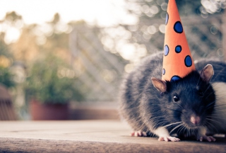 Free Party Mouse Picture for Android, iPhone and iPad