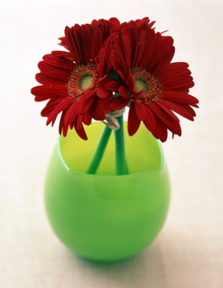 Free Gerbera In Vase Picture for Nokia C1-01