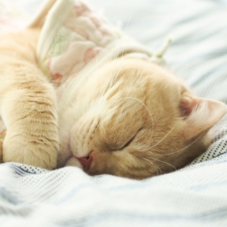 Sleeping Kitten in Bed - Fondos de pantalla gratis para 1024x1024