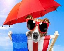 Funny Summer Dog para 220x176