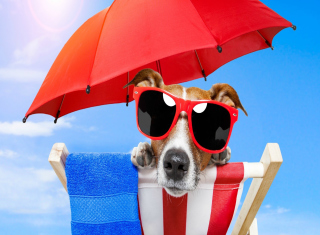 Funny Summer Dog Background for Android, iPhone and iPad