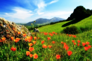 Mountainscape And Poppies - Obrázkek zdarma
