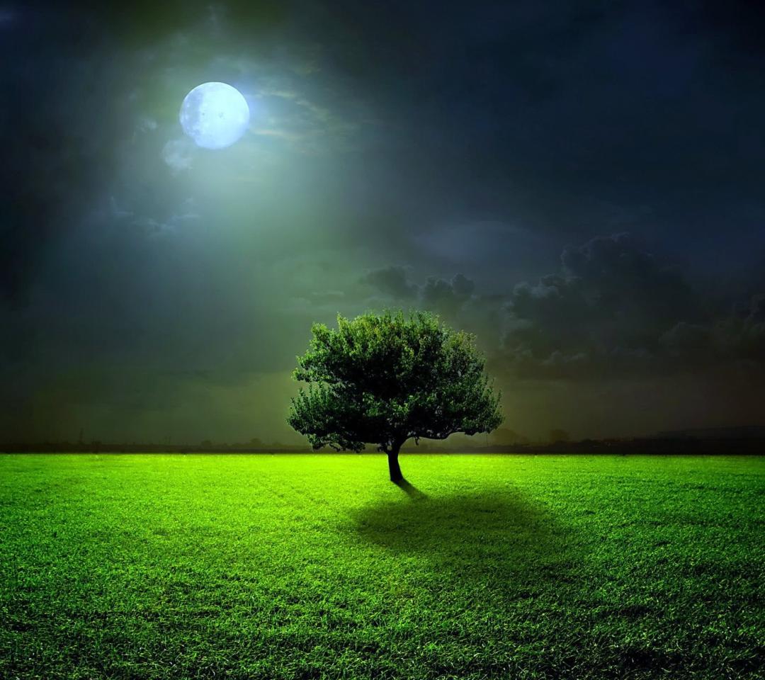 Evening With Lonely Tree para Motorola RAZR XT910