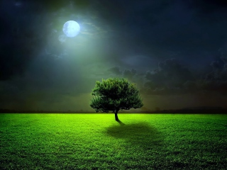Evening With Lonely Tree para Nokia Asha 201
