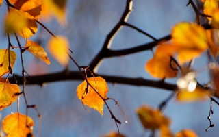 Yellow Leaves - Fondos de pantalla gratis