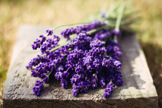 Lovely Lavender Bouquet Background for Android, iPhone and iPad