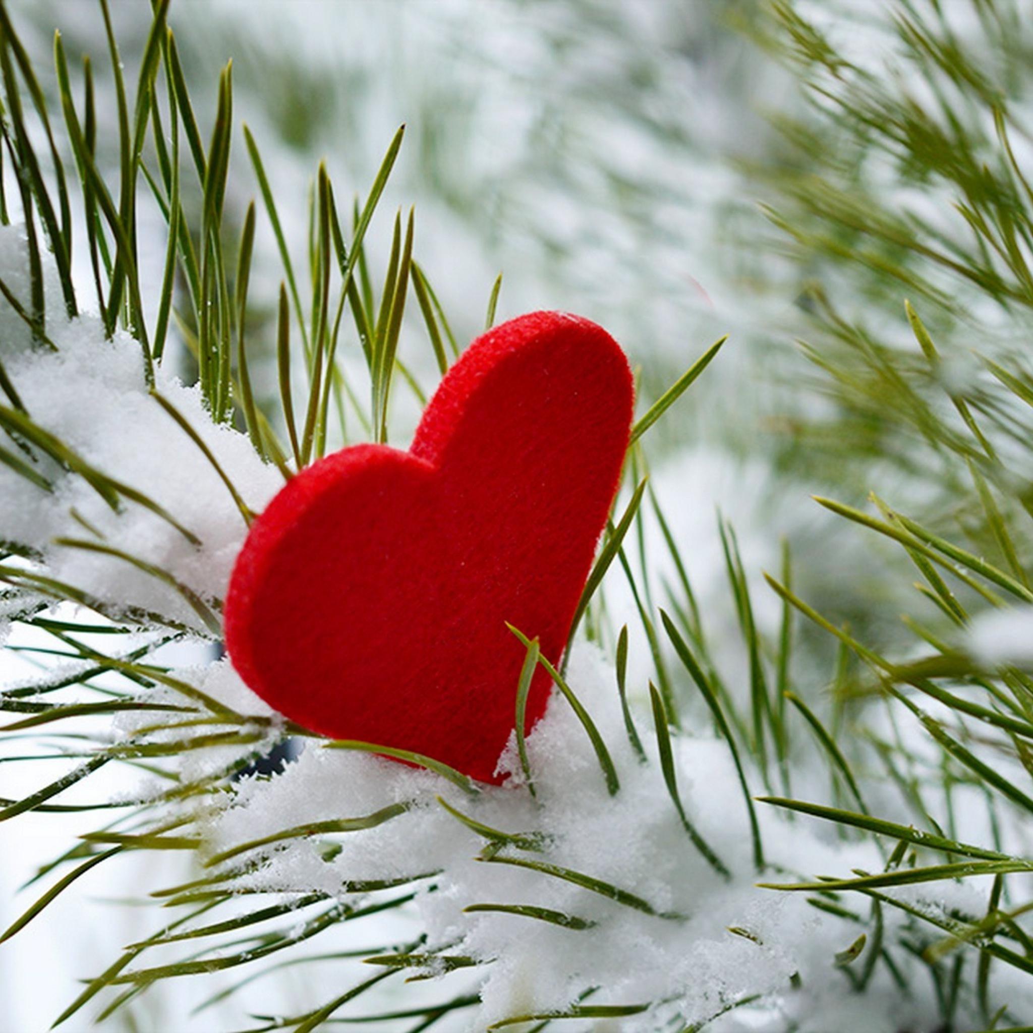 любовь ветки сердца скачать