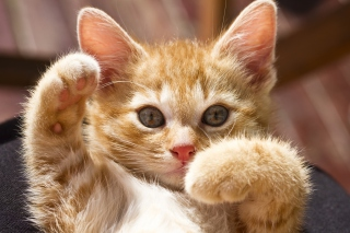 Free Redhead Kitty Paws Picture for Android, iPhone and iPad