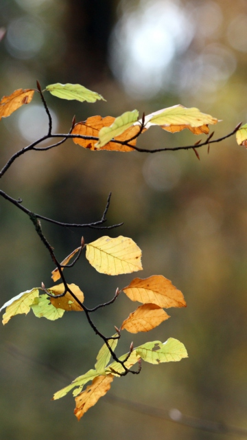 Autumn Twig