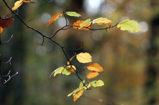 Autumn Twig Picture for Android, iPhone and iPad
