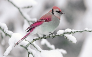 Snow Bird Background for Android, iPhone and iPad