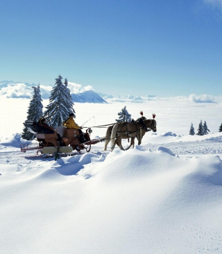Winter Snow And Sleigh With Horses Wallpaper for 240x400