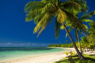 Free Paradise Coast Dominican Republic Picture for Android, iPhone and iPad