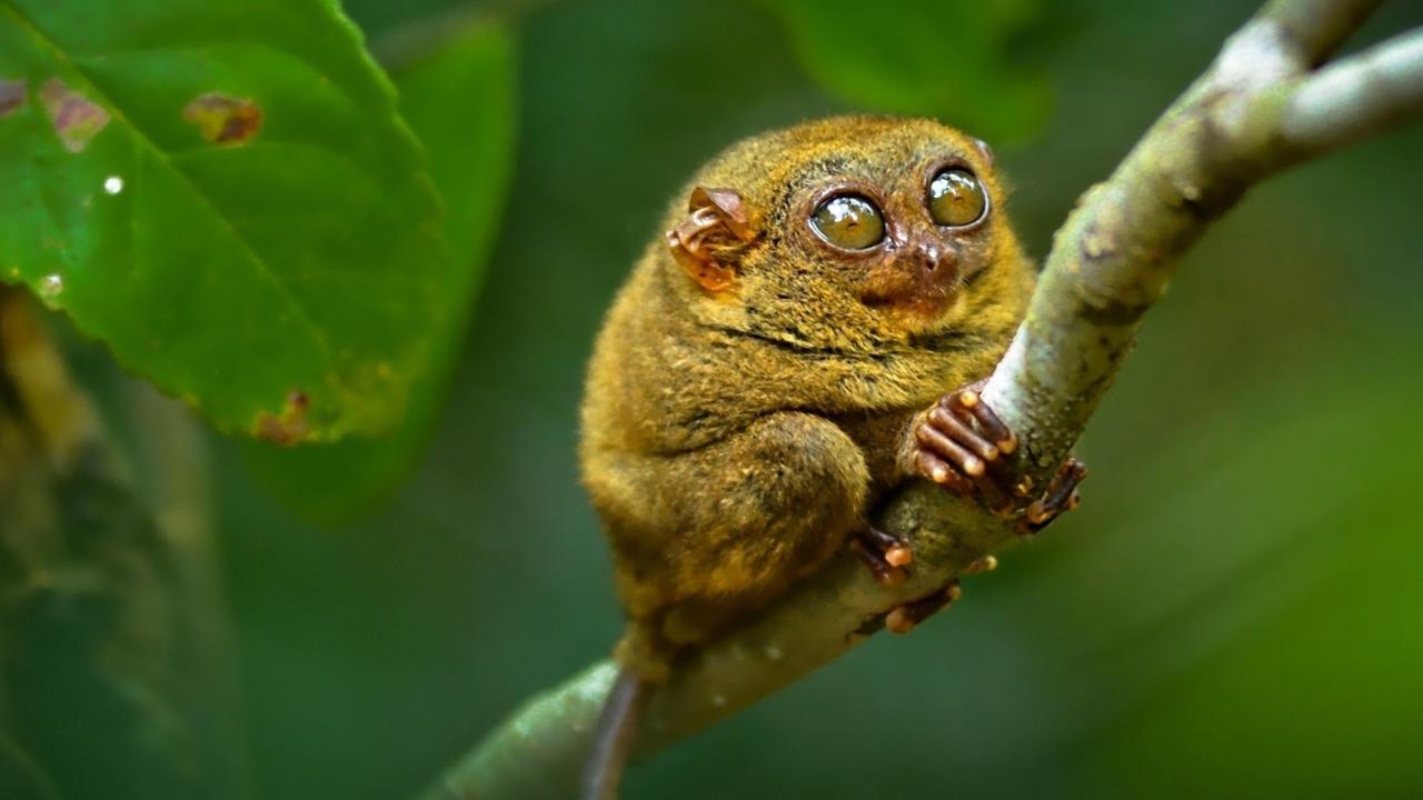 Little Lemurian
