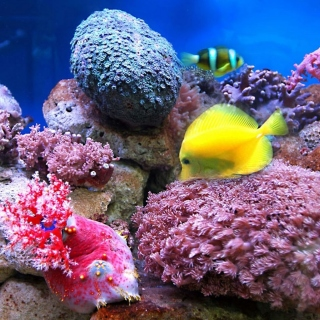 Colorful marine fishes in aquarium - Fondos de pantalla gratis para 1024x1024