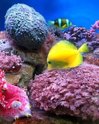 Colorful marine fishes in aquarium Background for HTC Titan