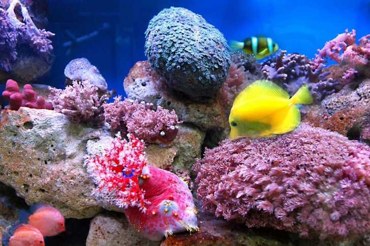 Colorful marine fishes in aquarium wallpaper