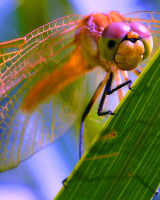Dragonfly Background for Nokia X2