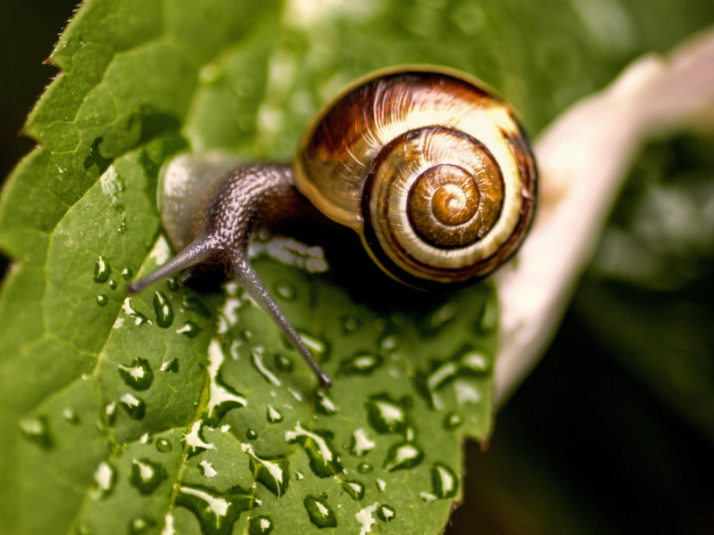 Screenshot №1 pro téma Snail and Drops 800x600