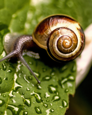 Snail and Drops sfondi gratuiti per 132x176