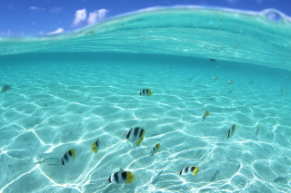 Underwater Life Background for Fullscreen Desktop 1024x768