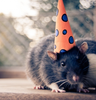 Free Mouse With A Hat Picture for 128x128