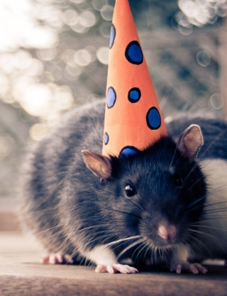 Free Mouse With A Hat Picture for 750x1334