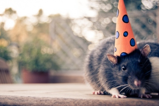 Free Mouse With A Hat Picture for Android, iPhone and iPad