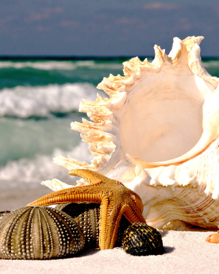 Free Seashells Picture for iPhone 6 Plus