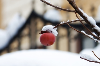Kostenloses Apple And First Snow Wallpaper für Android, iPhone und iPad
