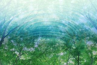 Tree Reflections In Water - Fondos de pantalla gratis para HTC EVO 4G