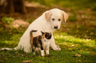 Puppy and Kitten Background for Android, iPhone and iPad